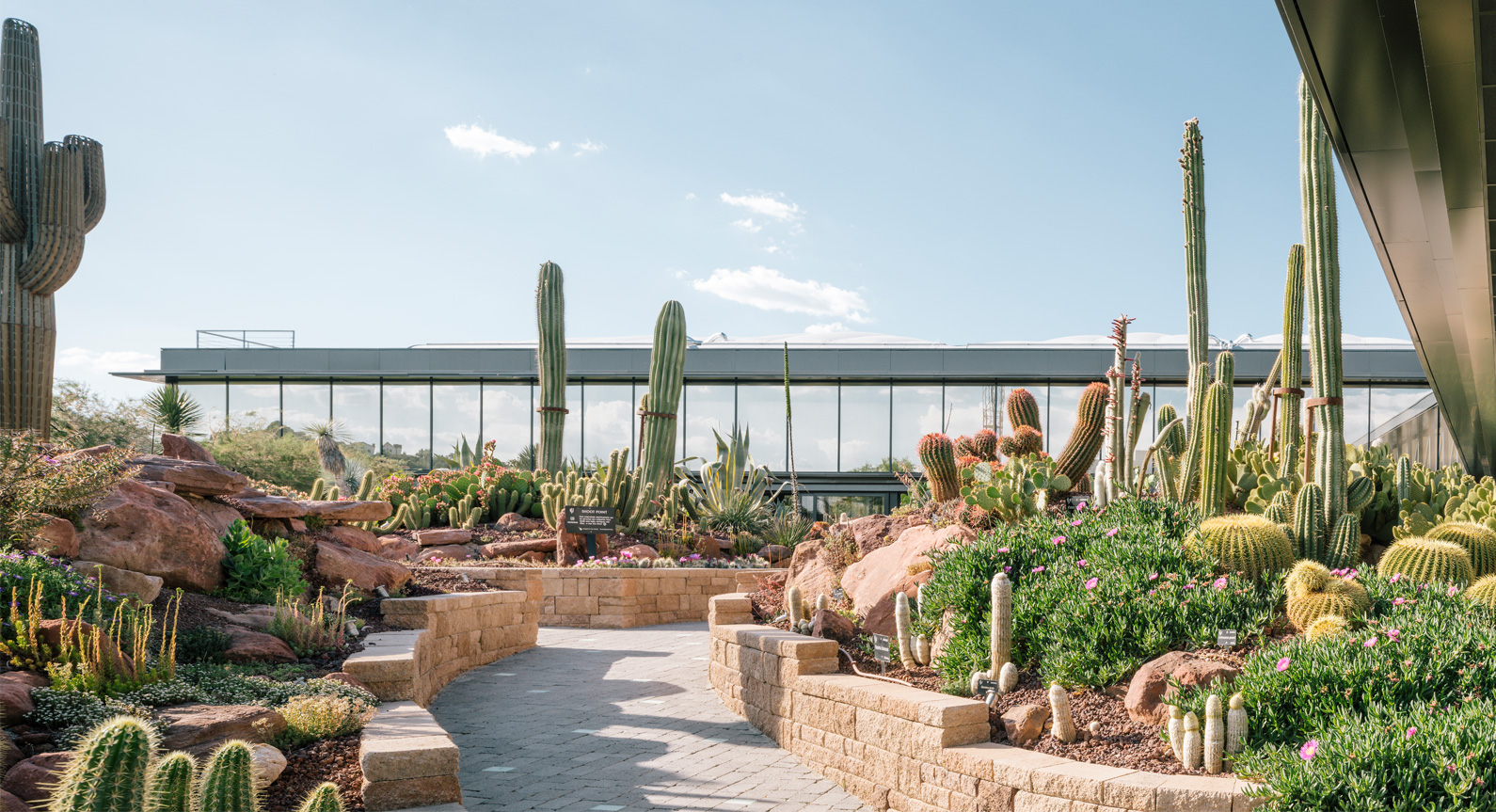 Madrid's Spectacular Desert City Complex Celebrates All Things Cacti